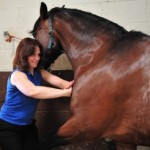 Sheena treating horse
